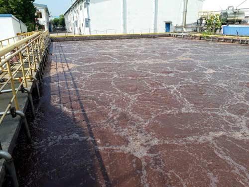 Vận chuyển bùn vi sinh tại Triều Khúc