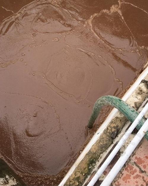 bùn vi sinh