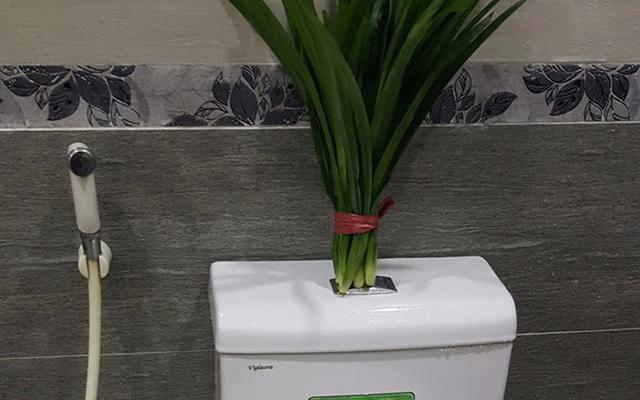 khử mùi nhà vệ sinh bằng lá dứa