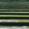 ảnh hưởng của rong rêu