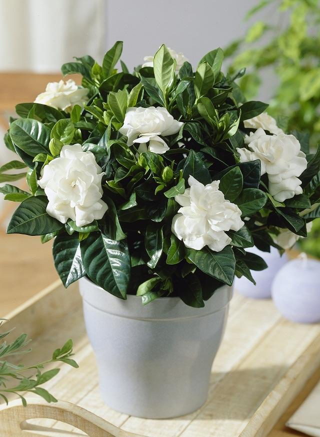 Sử dụng hoa khử mùi