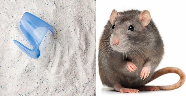 Cách đuổi chuột hiệu quả 4