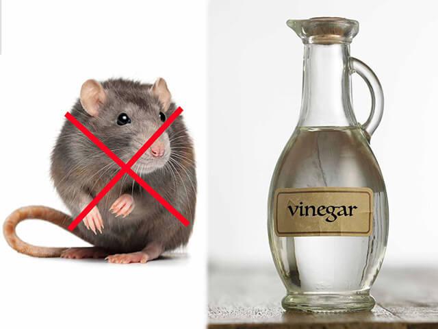 Cách đuổi chuột hiệu quả 7
