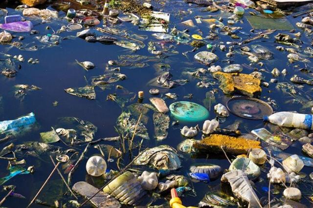 Hậu quả của ô nhiễm nước