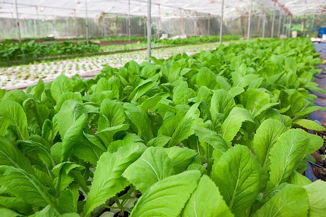 Ứng dụng của chế phẩm vi sinh trong nông nghiệp
